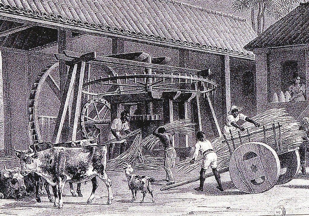 Engenhos de Cana Museu do Açúcar e Doce